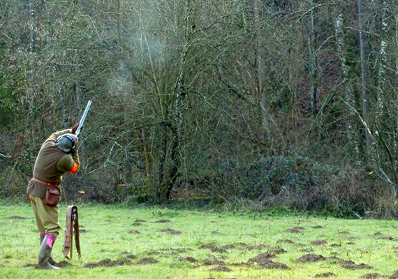 Partridge and pheasant Shooting